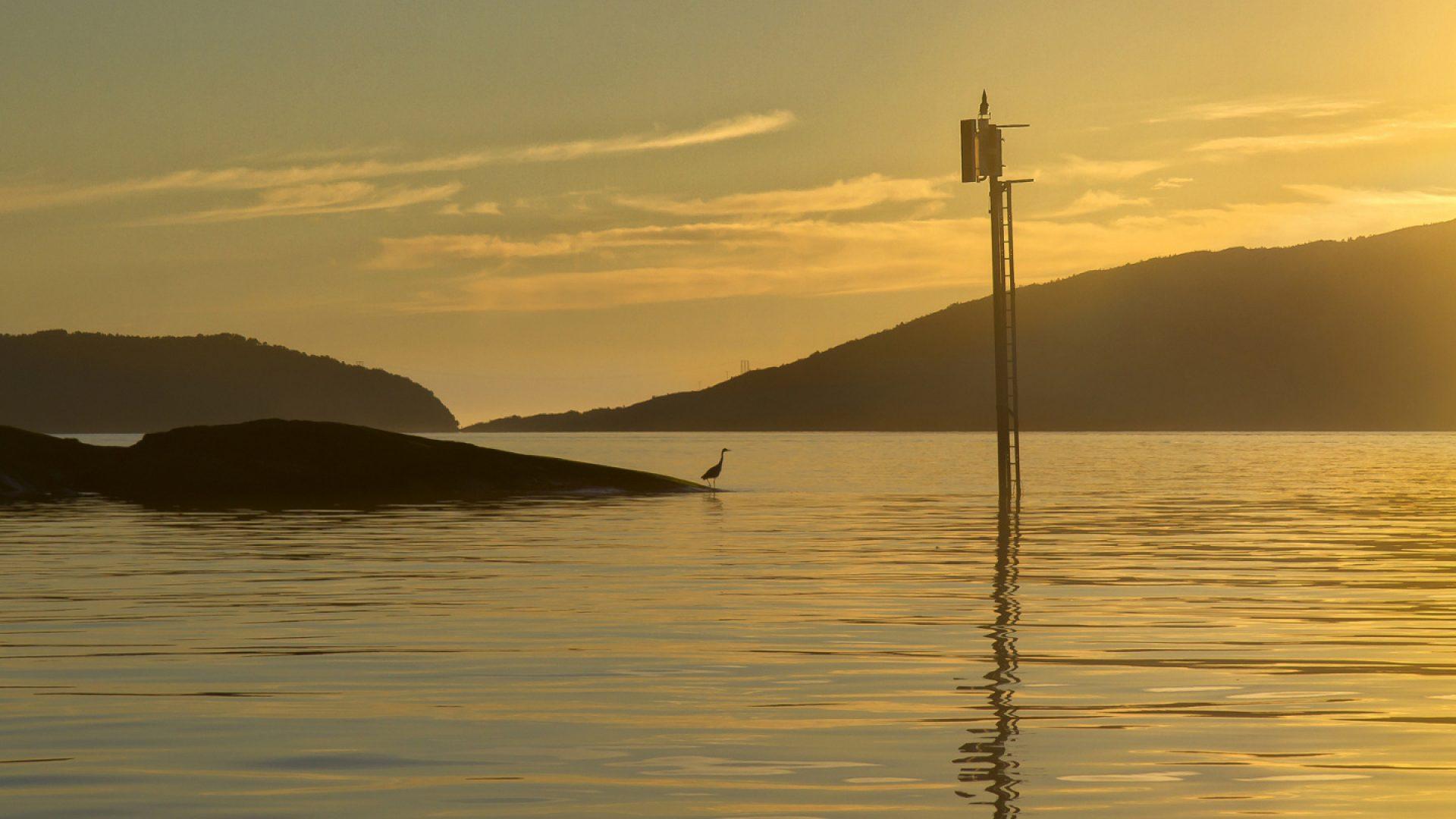 Speider utover havet. foto av Heidi Norum.